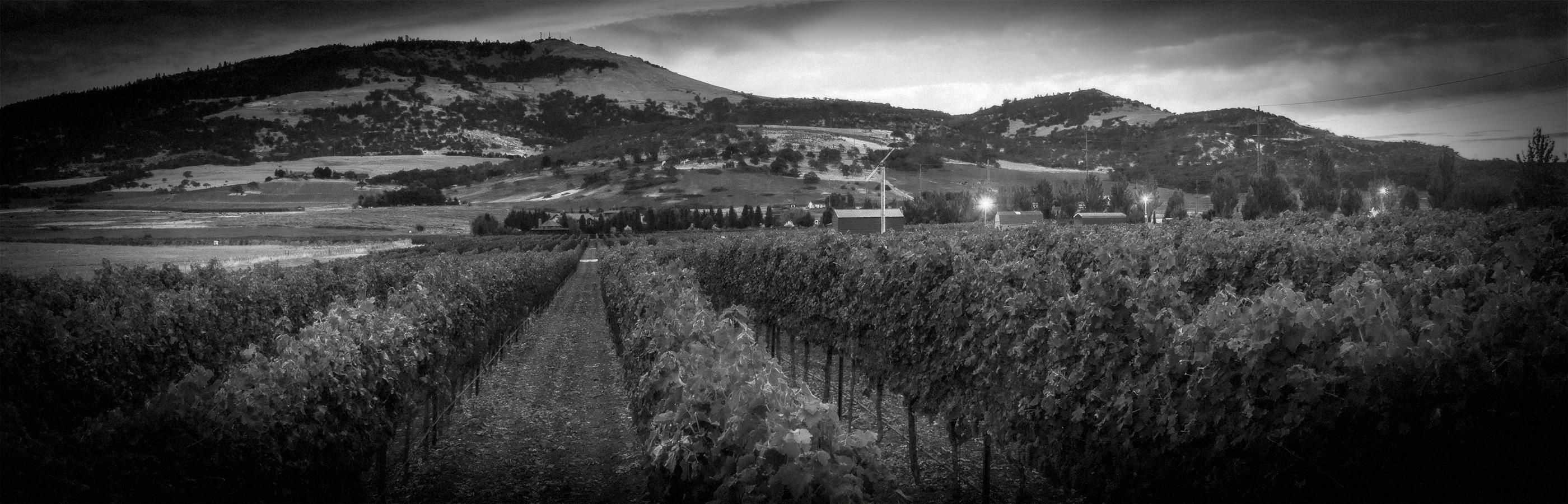 2Hawk Vineyard and Winery Vineyard at Sunset (Grayscale)