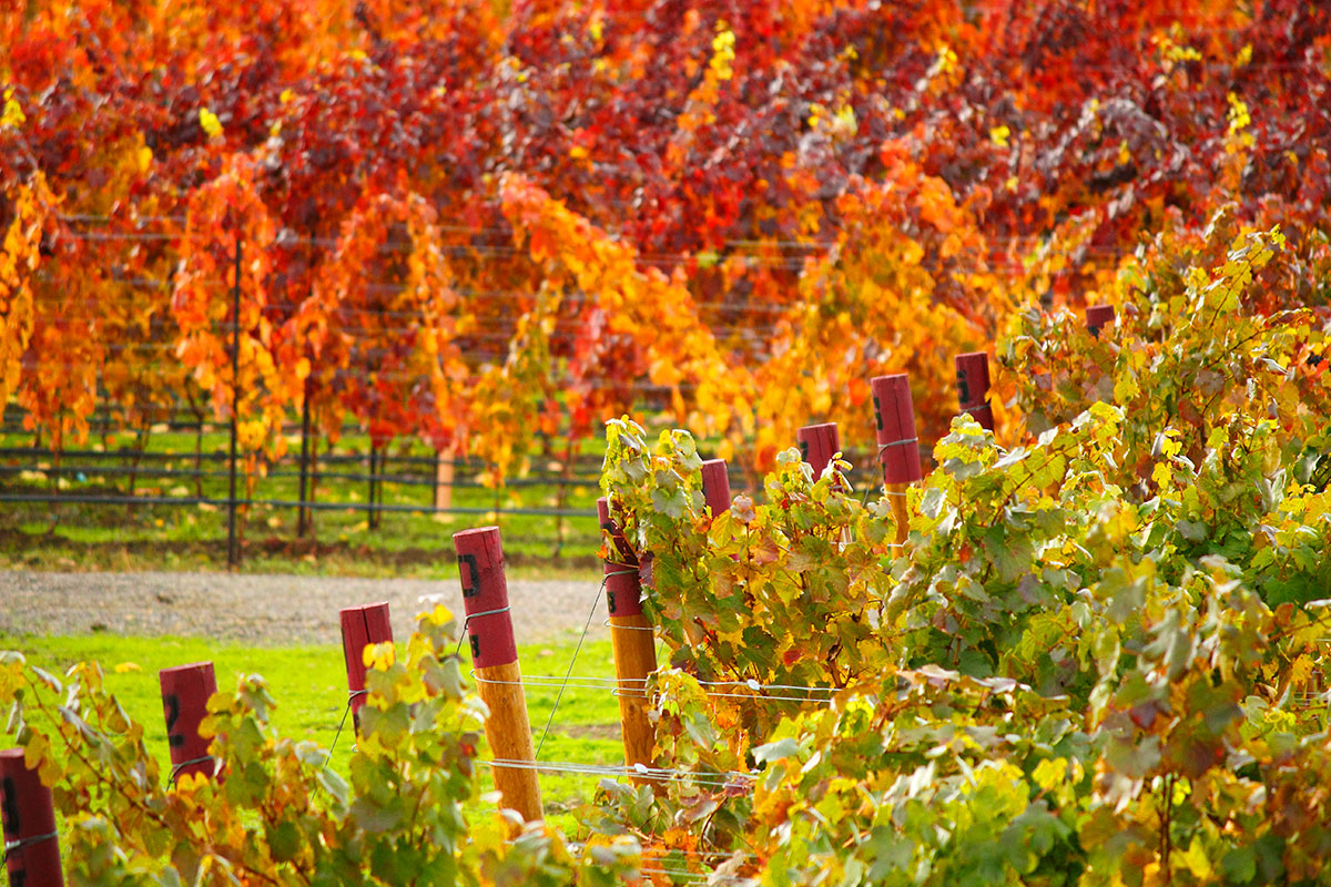 2Hawk Vineyard and Winery Autumn Colors