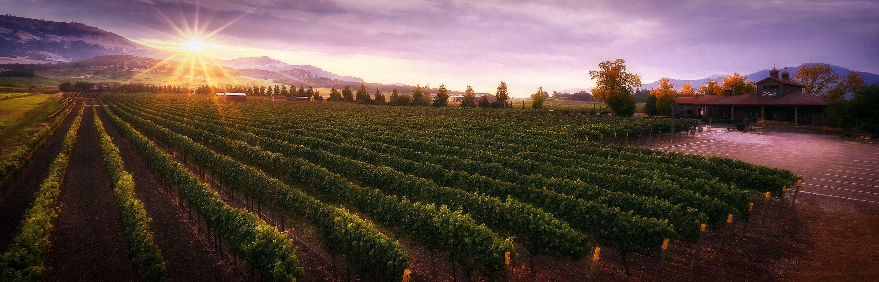 2Hawk Vineyard and Winery Building and Vineyard at Sunset