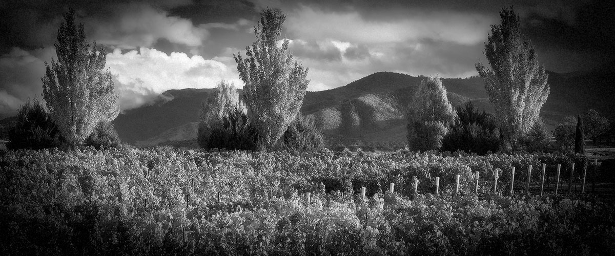 2Hawk Vineyard and Winery Grape Pressing During Winemaking (Grayscale)