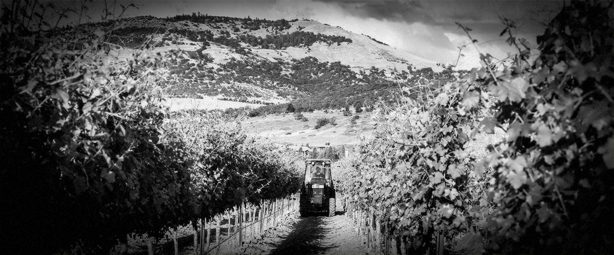 2Hawk Vineyard and Winery Tractor in Vineyard (Grayscale)