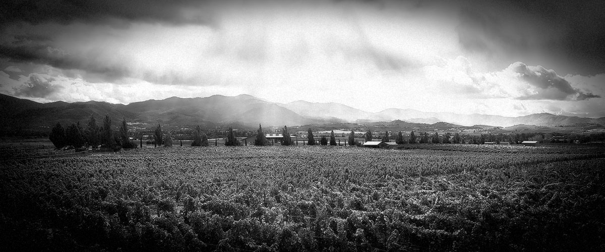 Purple Mountains Majesty at 2Hawk Vineyard and Winery Vineyard (Grayscale)
