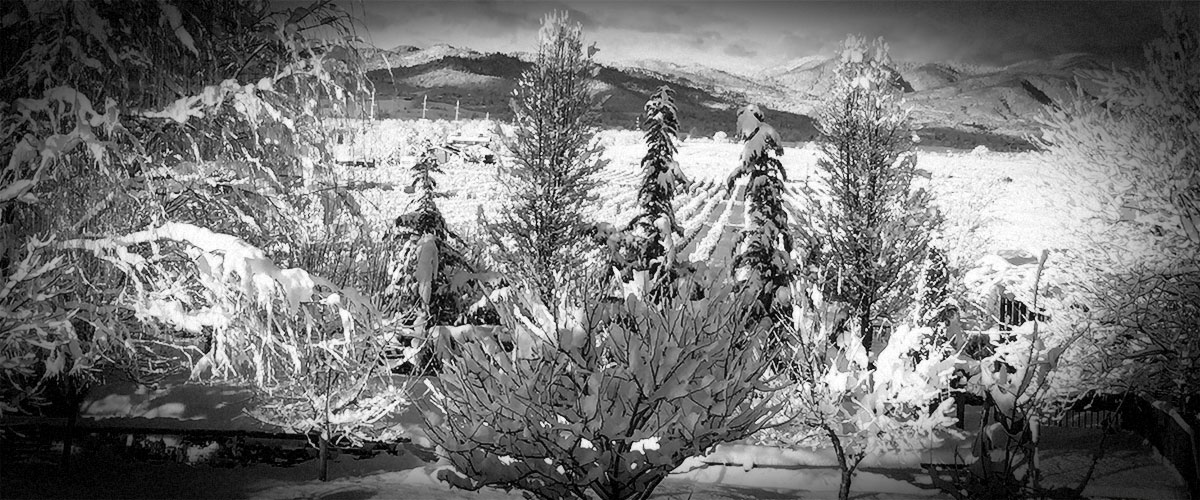 Snowy Vineyard Trees Mountains (Grayscale)