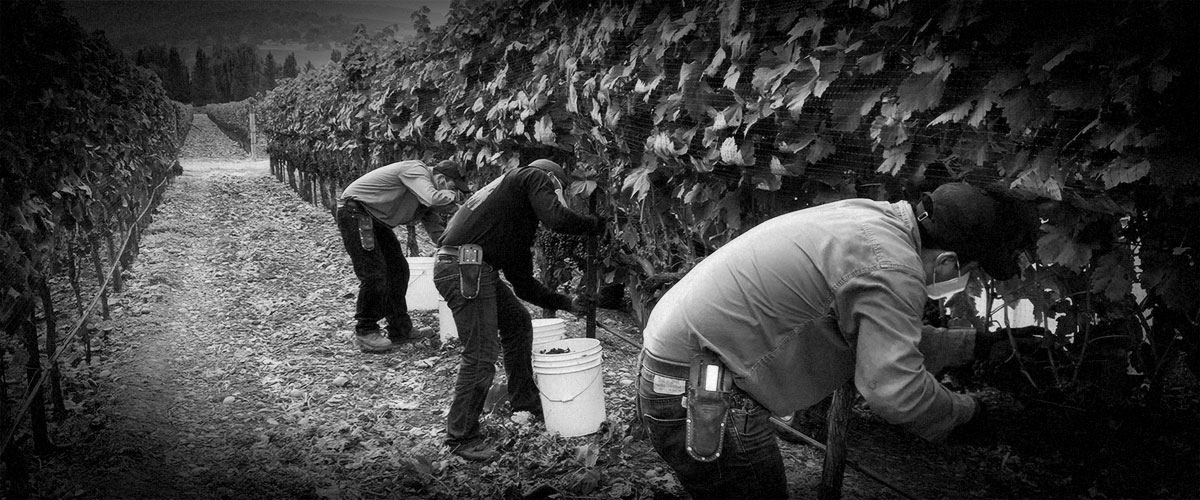 2Hawk Vineyard and Winery Fall 2020 Harvest (Grayscale)